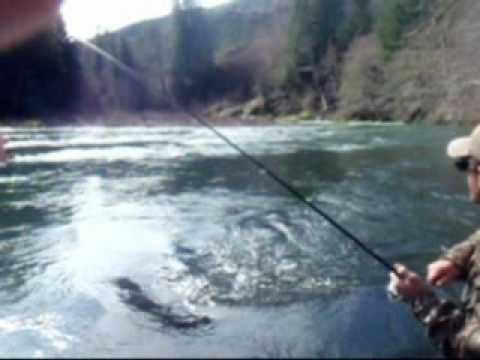 Massive siletz river steelhead youtube for Siletz river fishing report