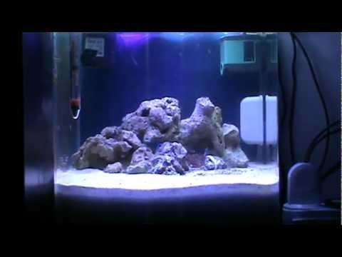Plafoniera led cree acquario marino doovi for Acquario marino