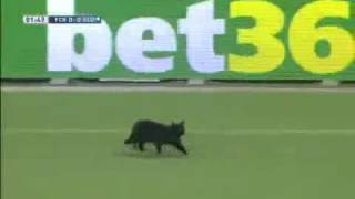 FC Barcelona 3:0 Elche - Black Cat Enter On Pitch