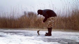 Жерлицы. Ловля щуки. Мормышка. Ловля окуня. Зимняя рыбалка.