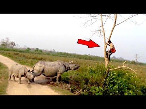 Такого Никто Не Ожидал! 6 Нападений Животных Снятых На Камеру
