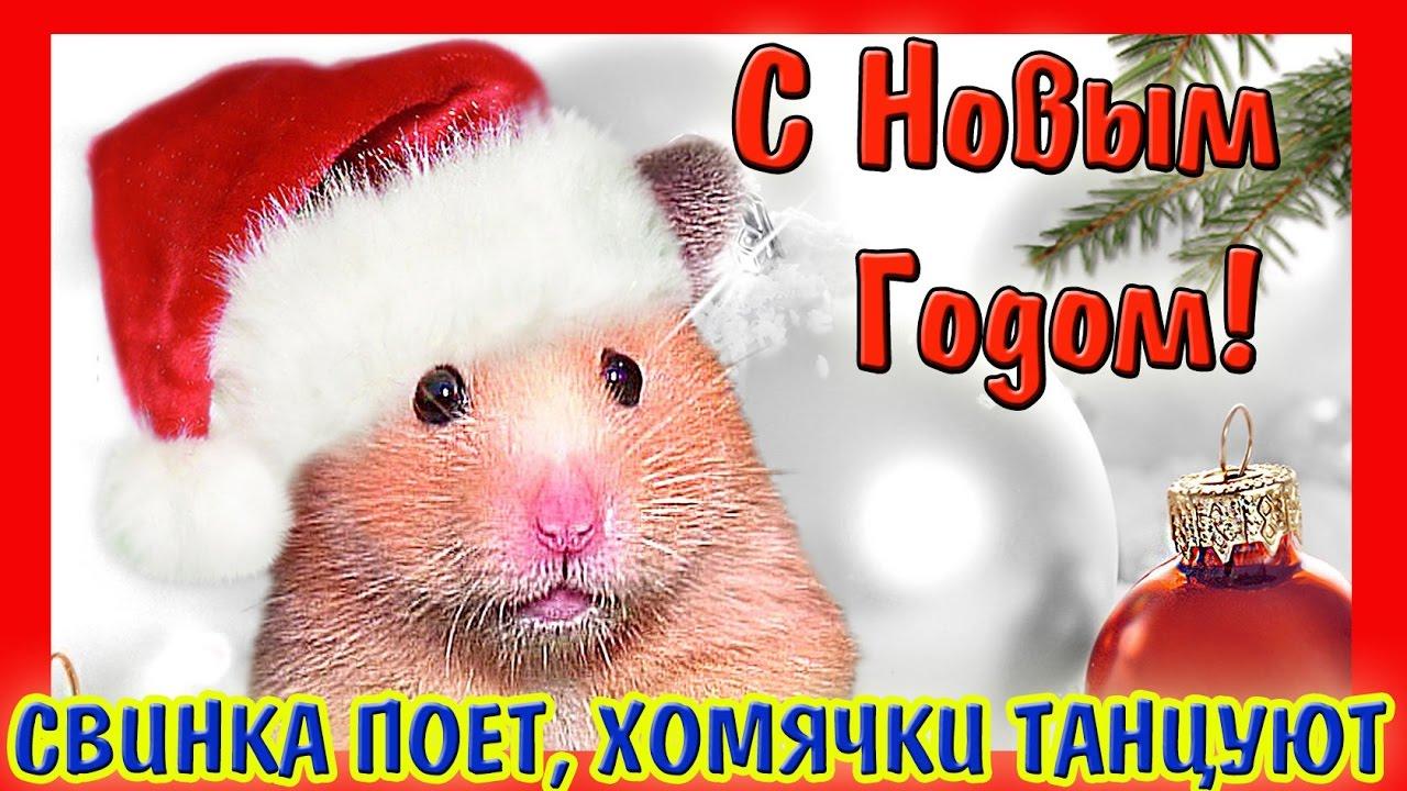 В интернет-магазине иванко доставка вы можете купить корма для грызунов. Корм «зверюшки»® для крыс и мышей изготовлен из качественных.