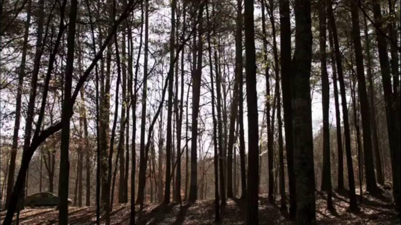 Teens in the wood