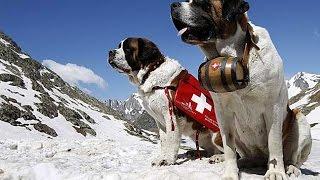КИНОЛОГИ (спасатели-волонтеры) методика обучения собак-спасателей