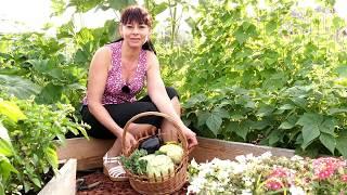 Când și cum recoltăm legumele din grădină