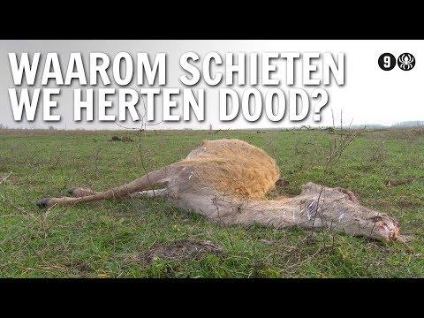 Waarom schieten we herten dood? | De Buitendienst over de Oostvaardersplassen
