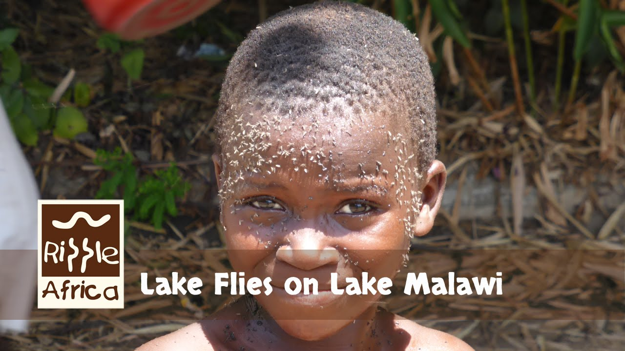 how to get rid of lake flies