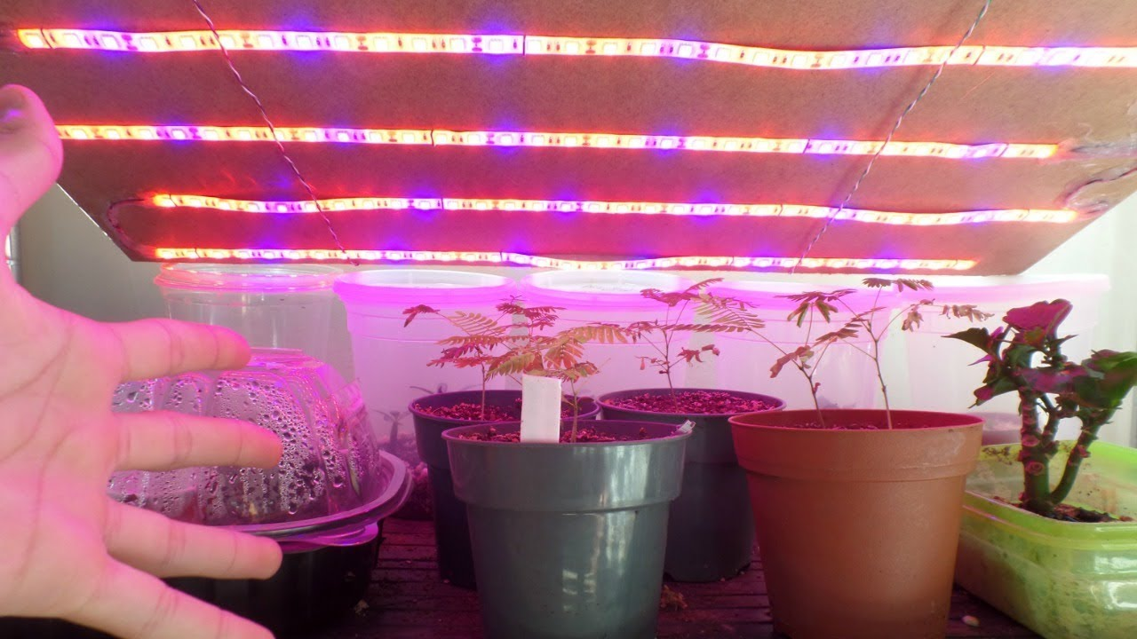 Unboxing And Review Of Topled Grow Strip Lights