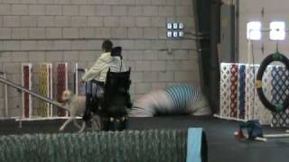 Dog Agility Course With Handler Using Wheelchair Dec 2009.mpg