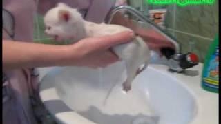 уход за животными, красивый котик, клип, ванна