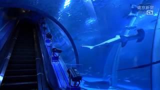 【20分】休園中の横浜・八景島シーパラダイスの大水槽