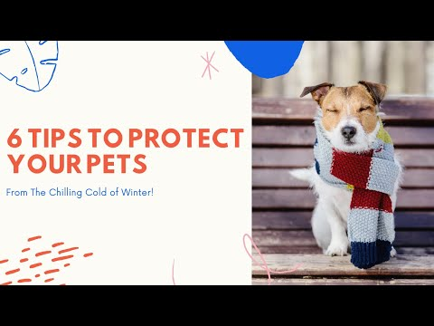 6 Tips To Protect Your Pets From The Chilling Cold of Winter
