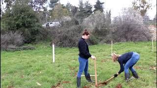 Olive Planting Program 2019