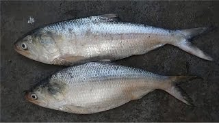 How To Clean and Wash the Fish in Telugu