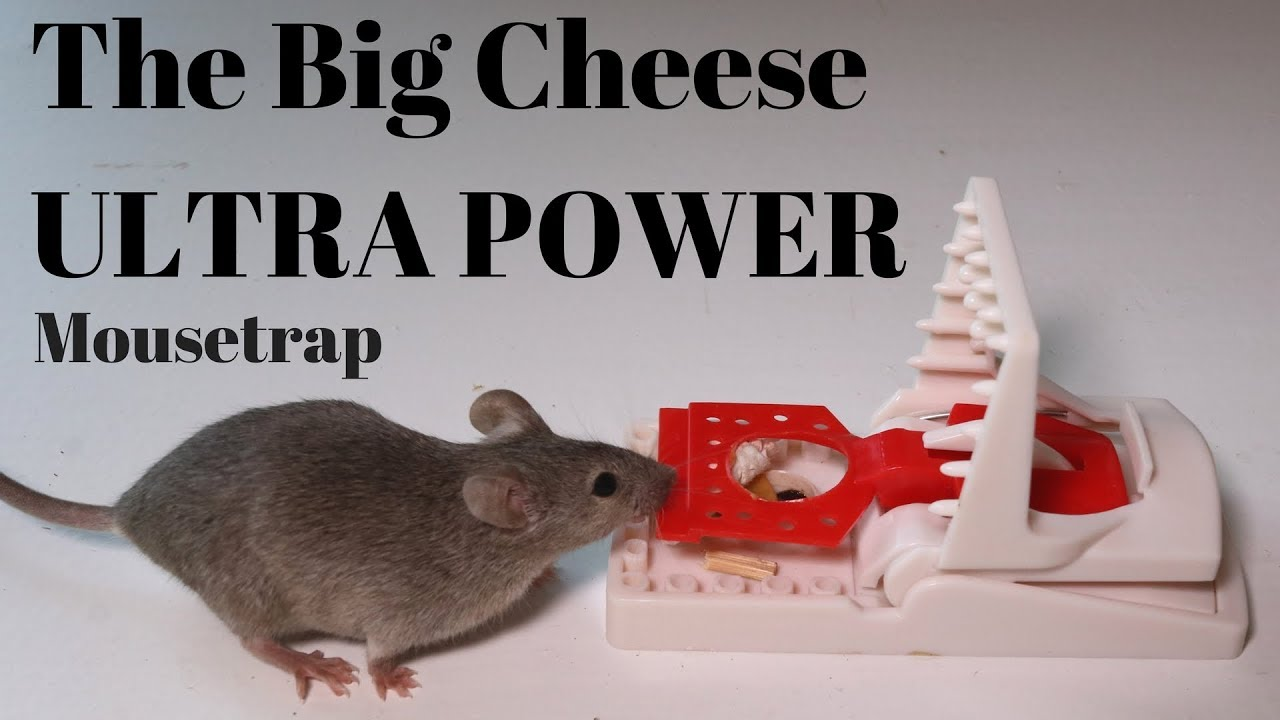 the-big-cheese-ultra-power-mousetrap-from-the-uk