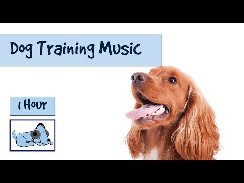 music-to-help-you-and-your-dog-during-training---dog-training-music!-🐶-#train06
