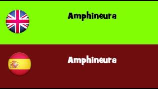 FROM ENGLISH TO SPANISH = Amphineura
