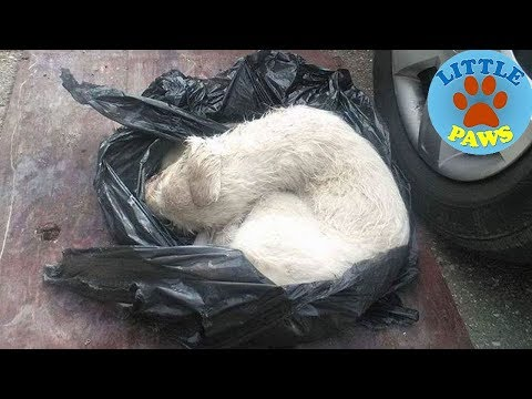 Puppy Found Tied In A Plastic Bag Was Going To Lost, Until These People Stepped In