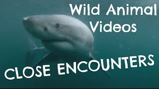 Wild Animals in Water - Close Encounters