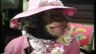 Captain Beefheart - Apes-Ma