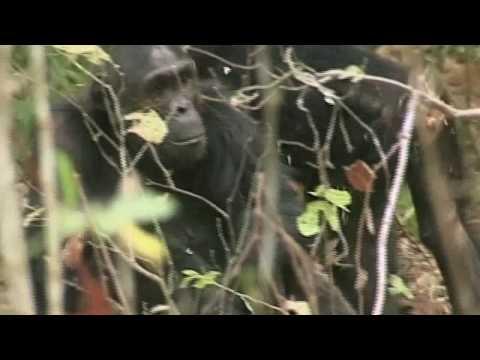 Tanzania - Serengeti National Park 2/1 - Africa