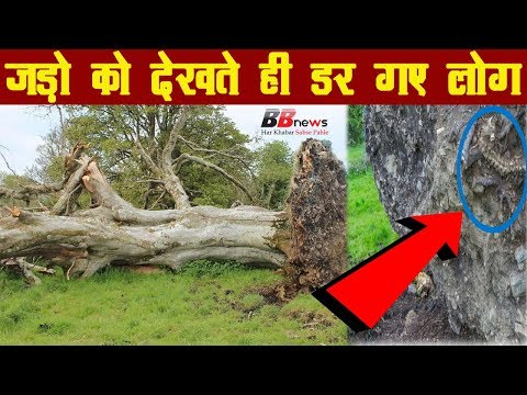 carbon dating method in hindi