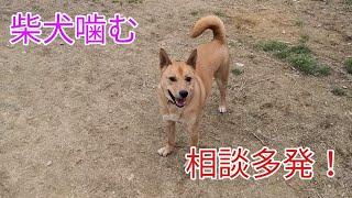 柴犬の相談多発!魔の柴犬スパイラル Dog Rescue A&R