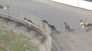 Albion-Park-12122018-Race-7