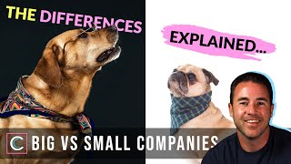 Should I Work for a Small or Large Company?
