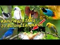 Ini  Burung Langka Hampir Punah Dan Dilindungi Di Indonesia Yang Wajib Kamu Tahu  Mp3 - Mp4 Download