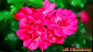 Music Video Sinhala Song Mal Ethirunu   Flawars Prageeth Chandana