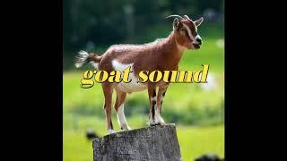 សំលេងពពែ - Goat sound