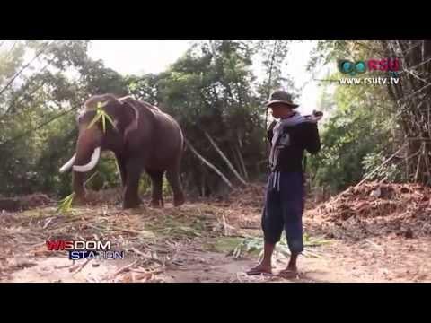 RSU Society : สารคดีช้างเร่ร่อน ตอน คิดสักนิค ก่อนเลี้ยงช้าง