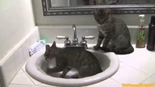 Кошки в ванной)