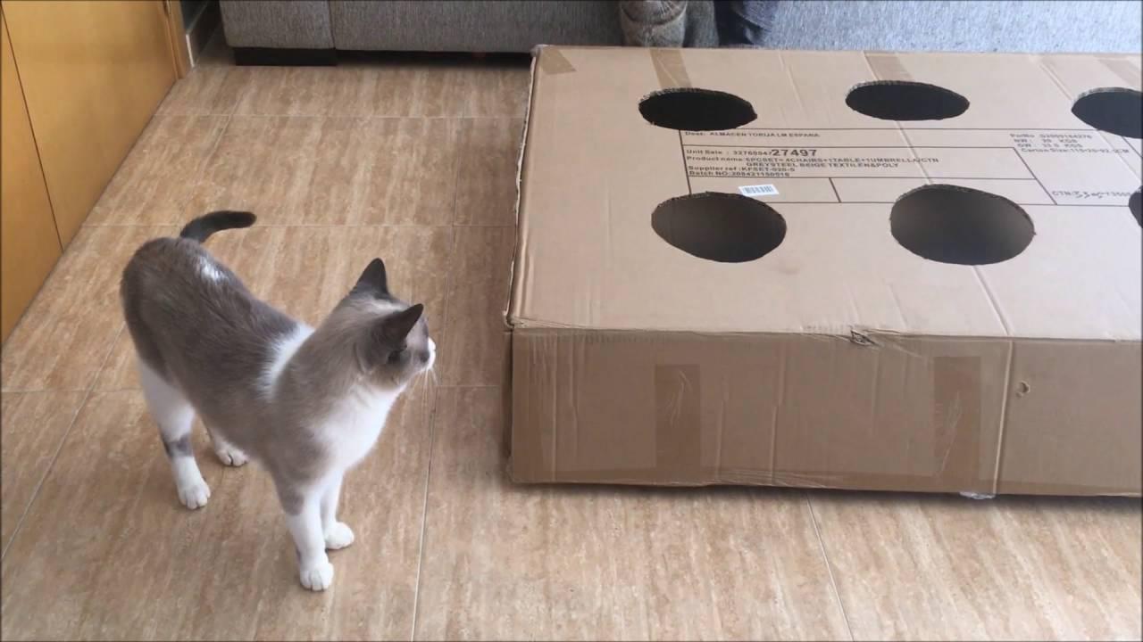 Juego para gatos en busca del rat n youtube for Como ahuyentar gatos del jardin