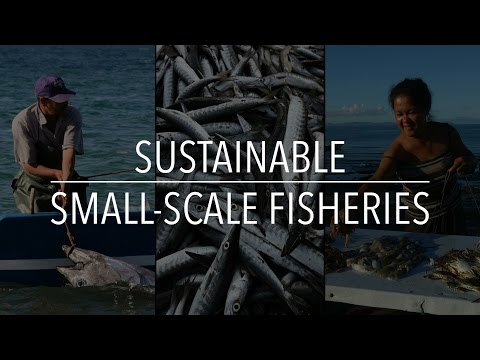 FAO Policy Series: Sustainable Small-Scale Fisheries
