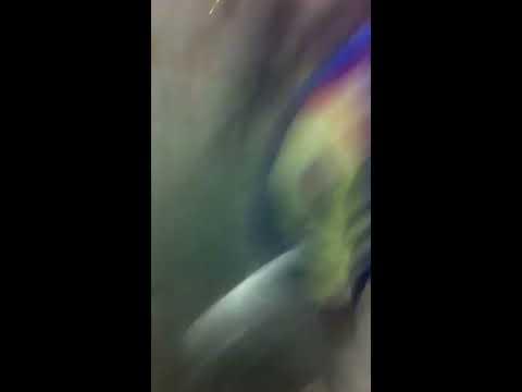 Gang brawl in Albany, NY at Basketball Game