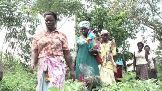 Women's rights to forests and trees in Uganda