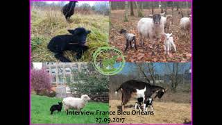 La Moutonte : Interview France Bleu Orléans