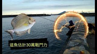 釣魚挑戰海水魚最難釣的魚非常叼.The hardest fish to catch