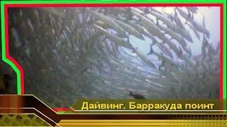 Дайвинг сафари. Воронка водоворот из миллиона Барракуд. Малайзия отдых. Тихий океан(Малайзия. Дайвинг сафари остров Сипадан. Гигантская воронка из миллиона барракуд в Тихом океане. Барракуда..., 2009-12-16T21:37:34.000Z)