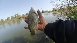 Балабино Домаха мест нет Рыба пошла на нерест