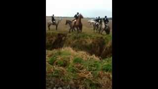 fingal harriers,