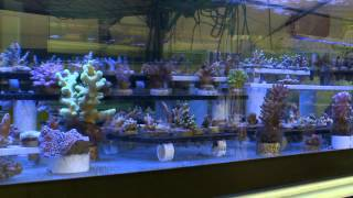 Coral/Reef propagation at Tidal Gardens with Blue Zoo TV