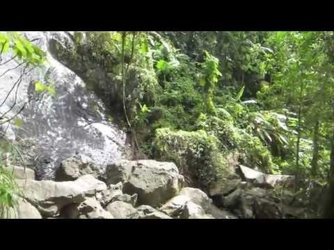 La Coca Falls in El Yunque National Forest Puerto Rico