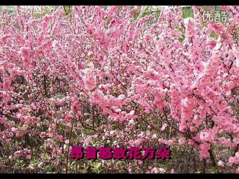 红梅赞 - 龚玥 Ode to the Red Plum Blossoms - Gong Yue