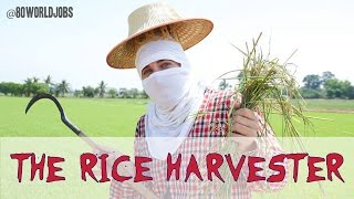 Rice Harvesting in Thailand: the Redundant Rice Farmer