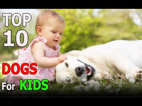 Top 10 best dog breeds for kids | Top 10 animals