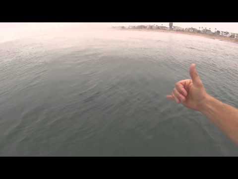 Shark Selfie Off Coast Of Huntington Beach
