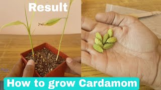 How to grow Cardamom from seeds, How to grow Cardamom plant from seeds